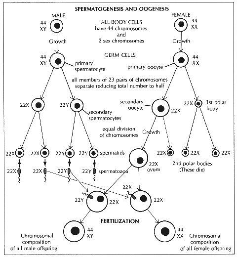 stimuliruyushie-spermatogenez-meropriyatiya