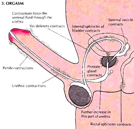 Technics for anal intercourse